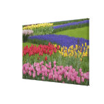 Garden of tulips, Grape Hyacinth and Canvas Print
