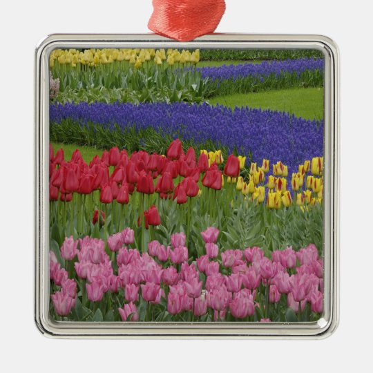 Garden of tulips, Grape Hyacinth and Metal Ornament