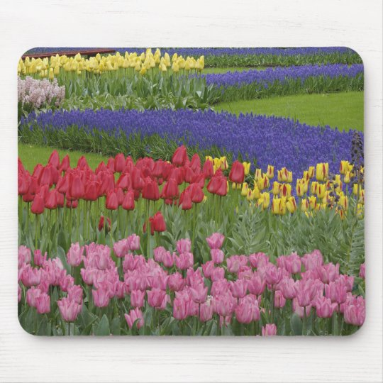 Garden of tulips, Grape Hyacinth and Mouse Pad