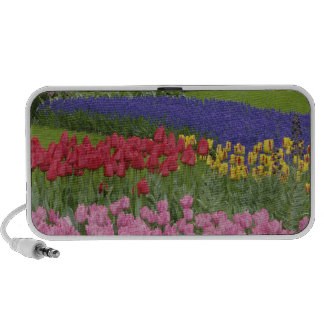 Garden of tulips, Grape Hyacinth and Speaker System
