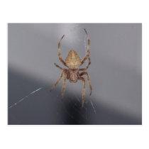 Garden Orb Weaver Spider Postcard