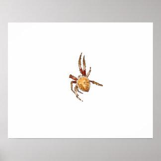 Garden Orb Weaver Spider Posters