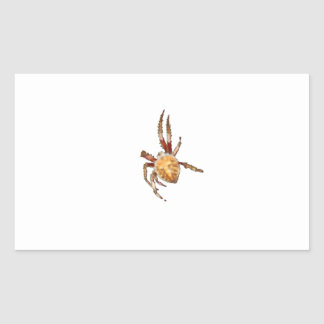 Garden Orb Weaver Spider Rectangular Sticker