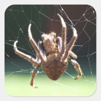 Garden Orb Weaver Spider Sticker
