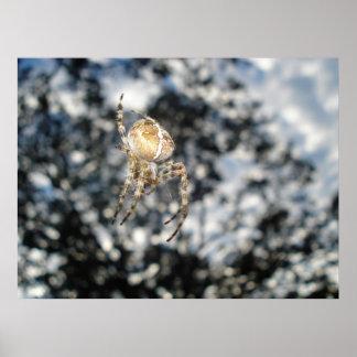 Garden Orbweaver Spider poster