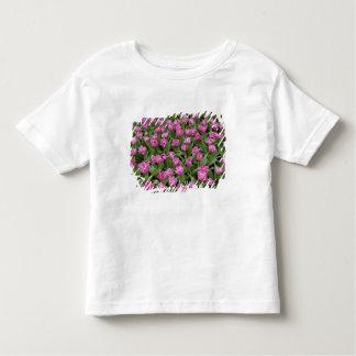 Garden pattern of tulips, Keukenhof Gardens, Toddler T-shirt