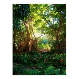 garden peace postcard