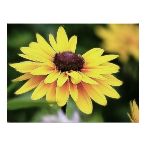 Garden Perfection - Black Eyed Susan Posters