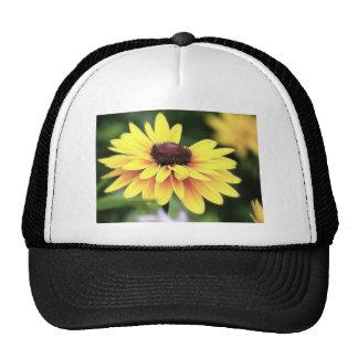 Garden Perfection - Black Eyed Susan Trucker Hat
