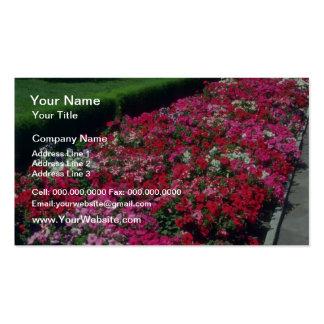 Garden Petunia Petunia Cv flowers Business Card Template