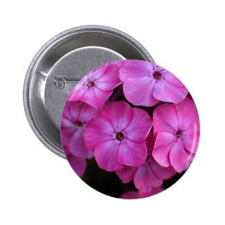 Garden phlox  (Phlox paniculata) Pinback Button