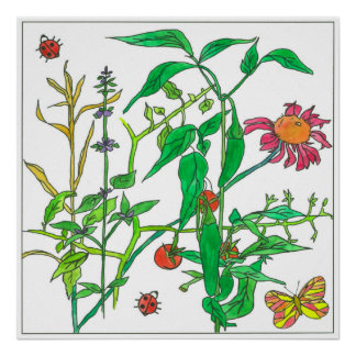Garden Plants Coneflower Ladybug Butterfly Poster