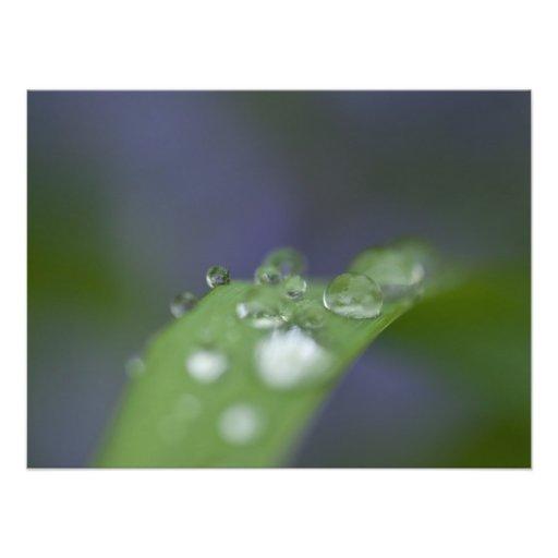 Garden Raindrops Art Photo