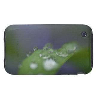 Garden Raindrops iPhone 3 Tough Case