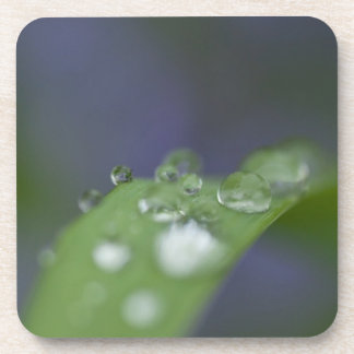 Garden Raindrops Drink Coaster