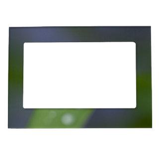 Garden Raindrops Magnetic Frame