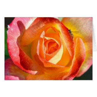 Garden Rose Card