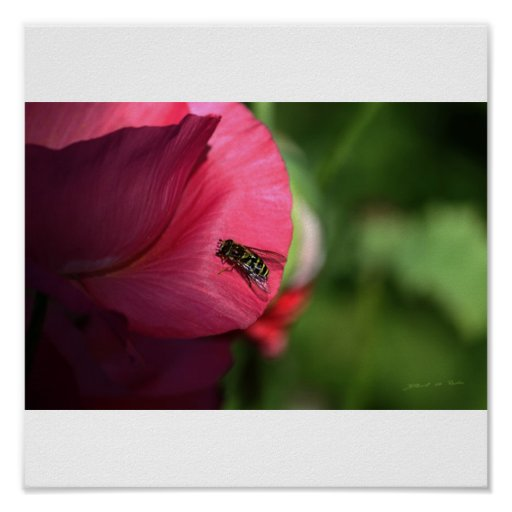 Garden Scenes; pollination Poster