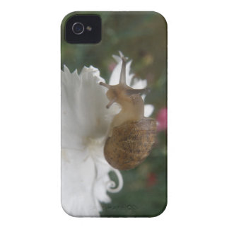 Garden Snail and White Carnation Blackberry Curve  iPhone 4 Cover