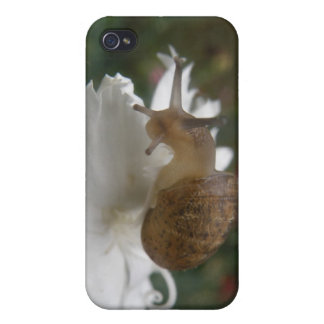 Garden Snail and White Carnation  iPhone 4 Cases