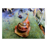 Garden Snail on Leaf in Abstract Card