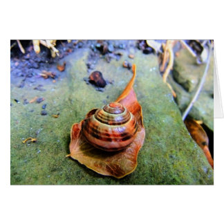 Garden Snail on Leaf in Abstract Greeting Card