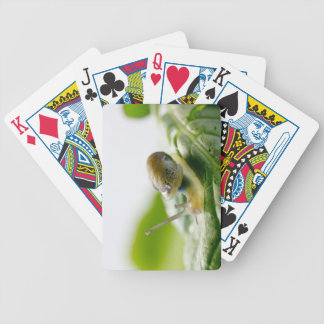 Garden snail on radish, California Bicycle Playing Cards
