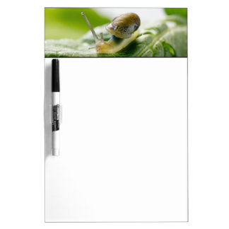 Garden snail on radish, California Dry Erase Board