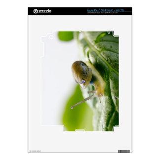 Garden snail on radish, California iPad 3 Skins