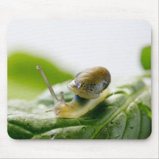 Garden snail on radish, California Mouse Pad