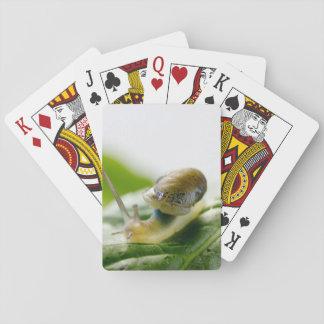 Garden snail on radish, California Playing Cards