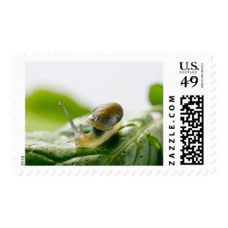 Garden snail on radish, California Stamp