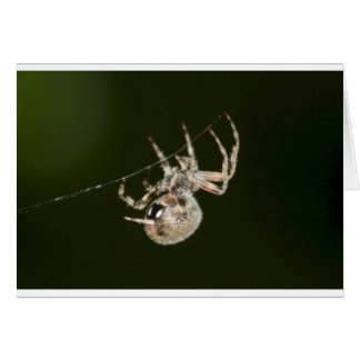 Garden Spider One Card