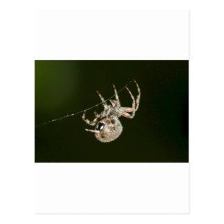 Garden Spider One Postcard