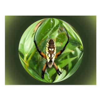 Garden Spider ~ postcard