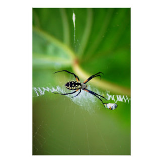 garden spider print