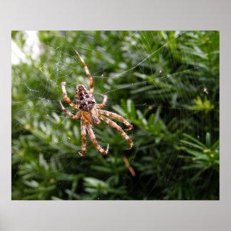 Garden Spider ~ print