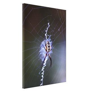 Garden Spider Stretched Canvas Print