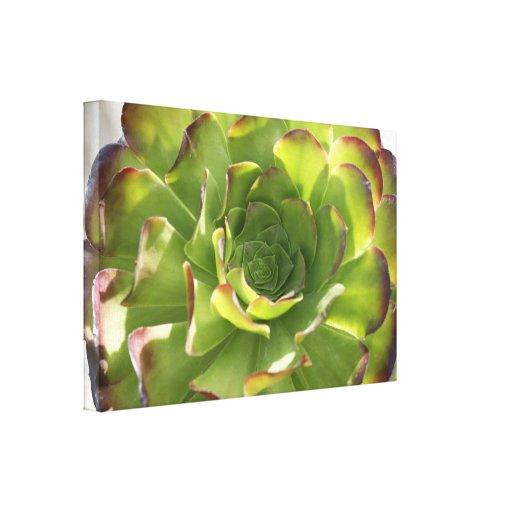 Garden Succulent Photo Wrapped Canvas Canvas Print