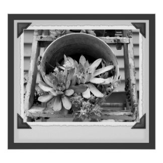 Garden Succulents Black And White Print