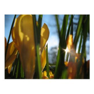 """Garden Sunset"" Greeting Card Postcards"