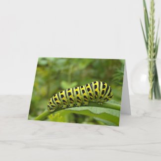 Garden Swallowtail Caterpillar Notecard