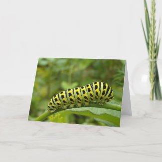 Garden Swallowtail Caterpillar Notecard