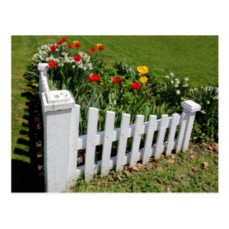 Garden Tulips With White Picket Fence Postcard