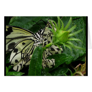 garden variety rodeo clown ~ 2009 butterfly series stationery note card