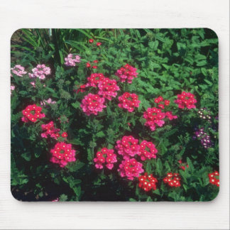 Garden Verbena (Verbena Hybrida) flowers Mouse Pads