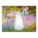 Garden - White cat Postcard
