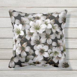 Garden White Saxifraga Flowers