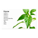 Gardener Bsiness Card Double-Sided Standard Business Cards (Pack Of 100)