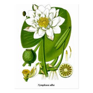 Gardener Postcard